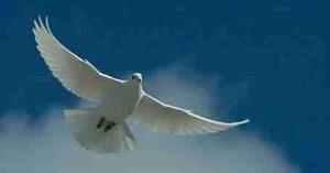 Jesus said, I leave you my peace